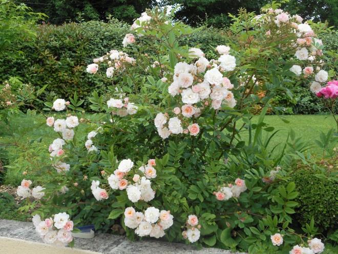 Promenons nous au jardin for Au jardin avec melanie gregoire